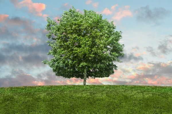 JPMorgan Chase Introduces Specialized Green Economy Team Supporting Environment Friendly...